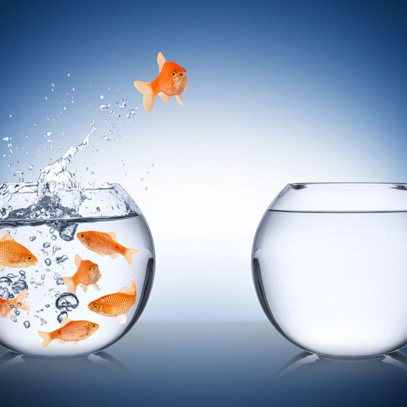 fishbowl_178129934